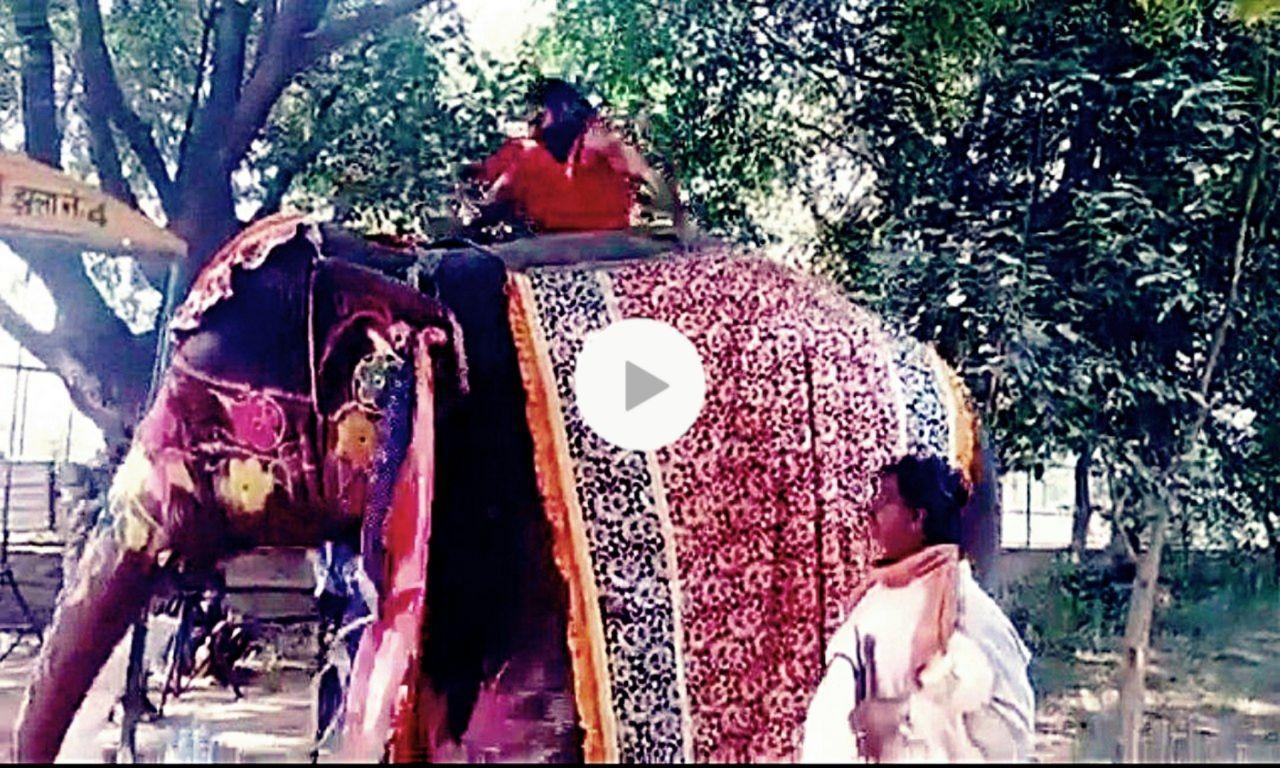 Photo of কী কান্ড! হাতির পিঠে বসে যোগাসোন শেখাতে গিয়ে উল্টে পড়লেন বাবা রামদেব, তুমুল ভাইরাল ভিডিও