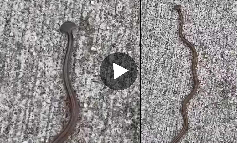 Photo of একেবারে সাপের মত দেখতে অদ্ভুত এই প্রাণীটিকে! সোশ্যাল মিডিয়ায় বিশাল ভাইরাল ভিডিও