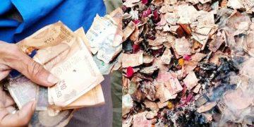 Kalighat Kolkata Burn Notes