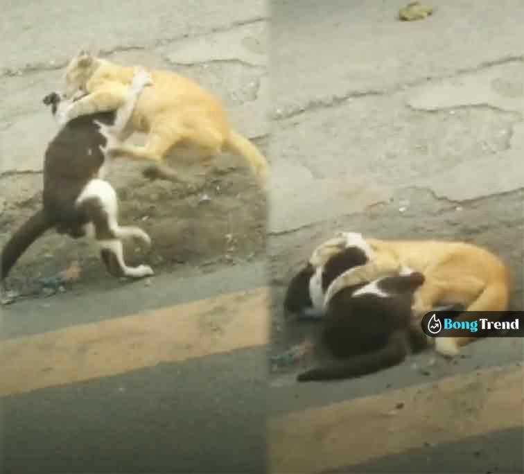 Cats fighting on road viral video বিড়ালের যুদ্ধ ভাইরাল ভিডিও