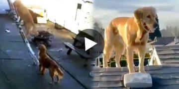 Dog Climbs Ladder Viral Video কুকুর মই দিয়ে চড়ল ভাইরাল ভিডিও