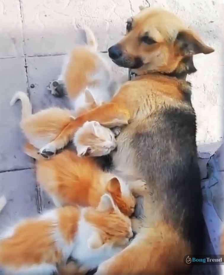 ভাইরাল ভিডিও Viral Video of Dog feeding cat babies milk