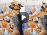 ভাইরাল ভিডিও Viral Video of Dog feeding cat babies milk