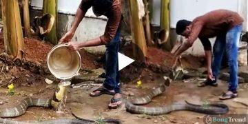 ভাইরাল ভিডিও Viral Video Bathing Cobra