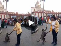 Viral Video ভাইরাল ভিডিও হনুমান জামা ধরে টানছে এক যুবতীর