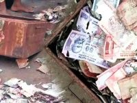Money Eaten by Termites Andhrapradesh Incedent