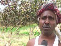 সত্যেন্দ্র মাঞ্জি Satyendra Majni Man who planted 10000 Guava plant in Bihar
