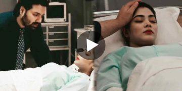 শঙ্খ মোহর ভাইরাল ভিডিও Viral Video of Shankha Mohar