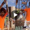 Viral Video ভাইরাল ভিডিও Tea seller in Nagpur Selling Tea with Swag