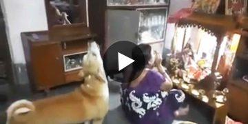 ভাইরাল ভিডিও Viral Video of Dog