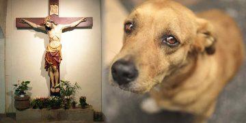 Dog goes to church
