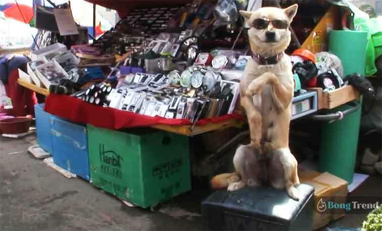 Dog Shopkeeper VIral Photos