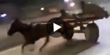 Viral Video Donkey Racing