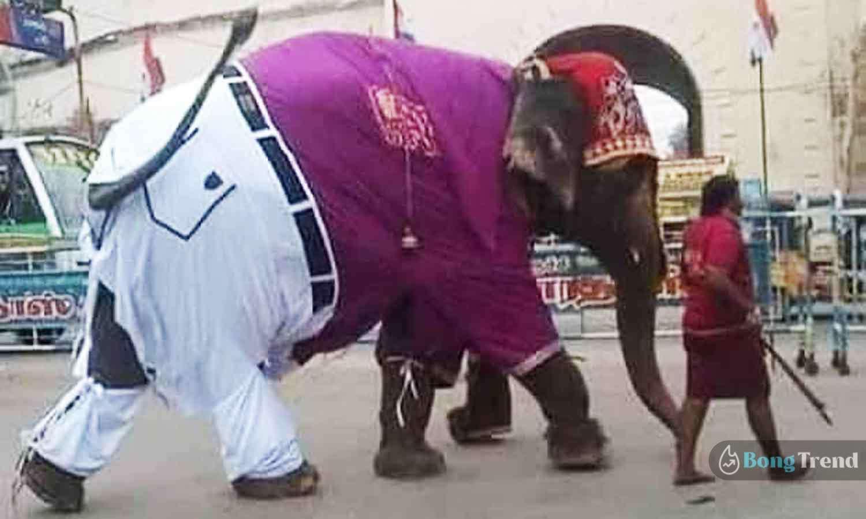 Photo of প্যান্ট শার্ট পরে রাস্তায় হাঁটছে হাতি! ভাইরাল ছবি শেয়ার হতেই দর্শকদের ভিড় নেটপাড়ায়