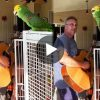 Viral Video of Parrot singing on Guitar Tune