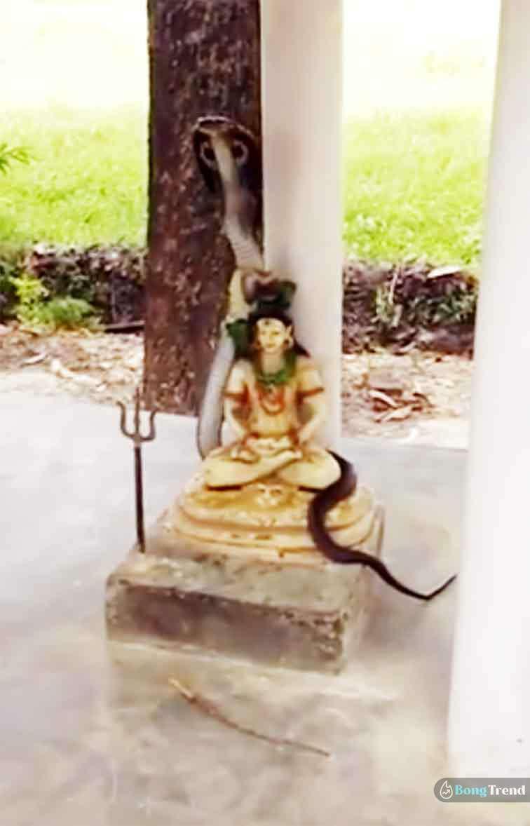 Viral Video of snake on shiva
