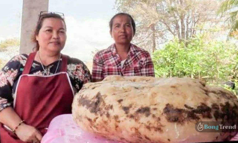 Photo of ভাসমান সোনা! 'তিমির বমি' খুঁজে পেয়ে রাতারাতি বড়লোক থাইল্যান্ডের মহিলা!