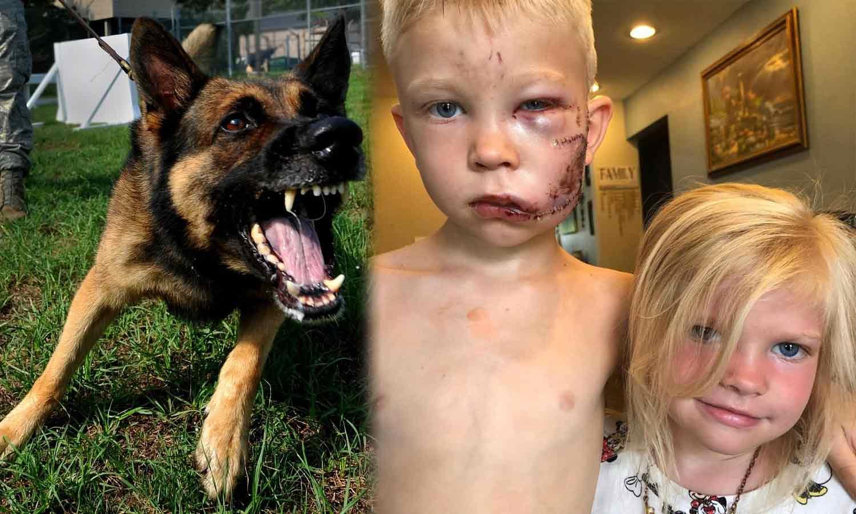 Boy Saved his sister from German shepherd