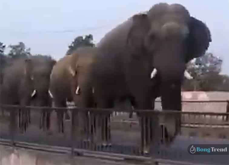 Viral Video Elephants going for haridwar