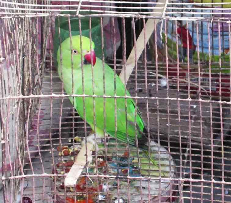 Viral Video of parrot calling mummy