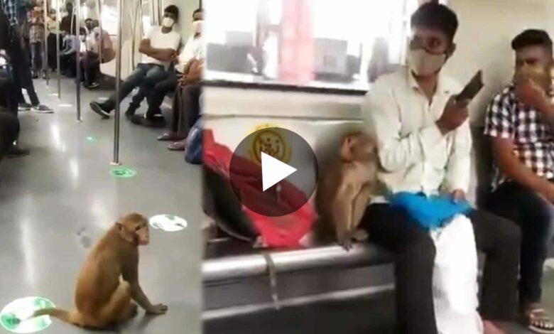 Monkey in Delhi Metro Viral Video