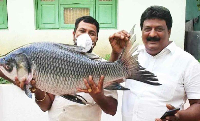 Andhra Business Man sends daughter gift of 1000 Kg Fish