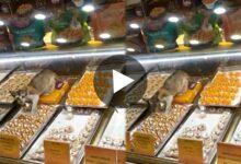 Photo of মিষ্টির শোরুমে ঢুকে মিষ্টি খাচ্ছে বেড়াল? সোশ্যাল মিডিয়াতে ভাইরাল হল ভিডিও