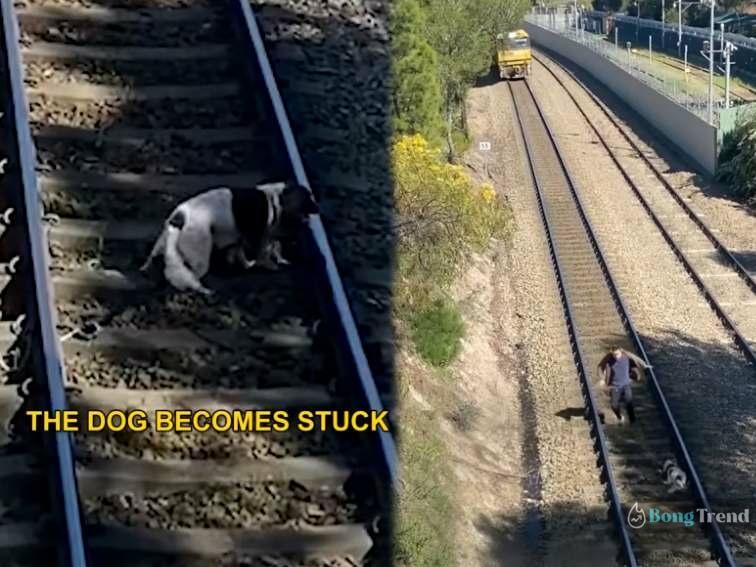 Dog Stuck in Train Line