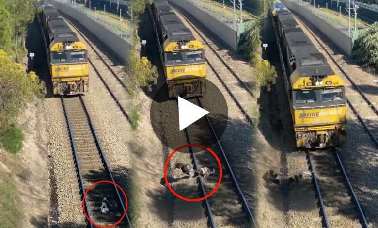 Man Saves Dog from Running train Viral Video